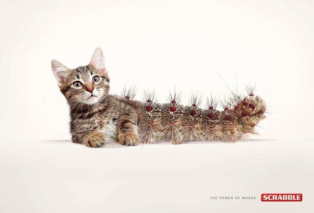 cat-erpillar_aotw